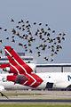 PH-MCW and birds (5914925578).jpg