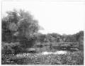 PSM V57 D185 Ny botanical garden meadows.png
