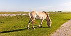 Paarden zorgen voor begrazing. Locatie, Noarderleech Provincie Friesland 02.jpg