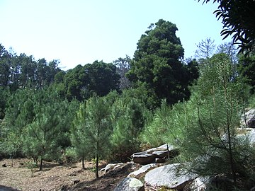 Paisaje. Tipo de vegetación en las Islas Cíes.jpg