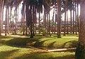Palmentuin 1994.jpg