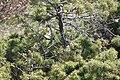 Paramiden von Stob b 20090407 039.JPG