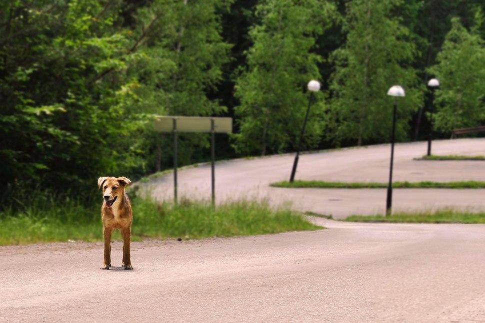 Park prirode Šumski kompleks oko višegradske banje 38