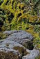 Parque Nacional La Campana Primera Aguada 03.JPG