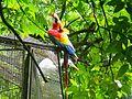 Parque Zoobotânico do Museu Paraense Emílio Goeldi-09.jpg