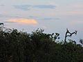 Parque nacional Aguaro-Guariquito 010.jpg