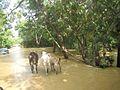 Parque nacional Aguaro-Guariquito 052.jpg