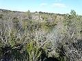 Paysage au sud du zoo de Lunaret (2364132846).jpg