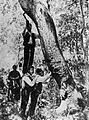 Peladores corcho 1895.jpg