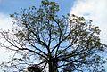 Pepohonan di semak belukar (9).JPG