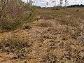 Periphyton at Mahogany Hammock^ - panoramio.jpg
