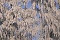 PermaLiv Byvegen-Overnvegen-vinter-trær 29-01-21 1.jpg