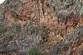 Peru - Sacred Valley & Incan Ruins 222 - Pisac (8114885582).jpg
