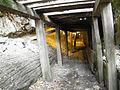 Petrified Forest - Stierch I.jpg