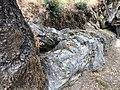 Petrified Redwood - Sequoia langsdorfii, Metasequoia - 9.jpg