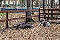Petting zoo in Vnukovo Outlet Village 07.jpg