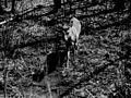 Photograph of a Deer Koochiching Company - NARA - 2129376.jpg