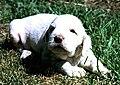 Piccolo cane simpatico.jpg