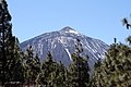 Pico del Teide through the trees (425297069).jpg