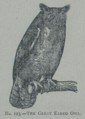 Picture Natural History - No 123 - The Great Eared Owl.png