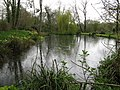 Picturesque pond at Bignor Mill - geograph.org.uk - 1247955.jpg