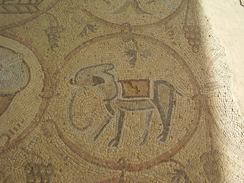 פיל בפסיפס מעון בנגב