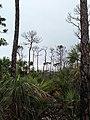 Pine View - panoramio (3).jpg