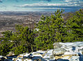 Pinus rigida Mt Tammany.jpg