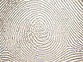 Plain whorl in a right thumbprint.JPG