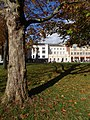 Plane tree, Cathedral green, Exeter - geograph.org.uk - 1046511.jpg