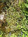 Plant.2535a.JPG