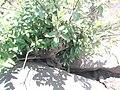 Planta aquática - panoramio.jpg