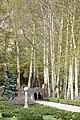 Platanus orientalis avenue, Sa'ad Abad Palace, Tehran, Iran (14473686382).jpg