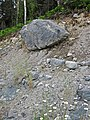 Pleistocene glacial till (Straight Lake West roadcut, north of Temagami, Ontario, Canada) 1 (33938518418).jpg