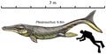 Plesiosuchus restoration.png