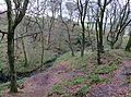 Pollick or Uplawmoor Glen and burn, Uplawmoor, East Renfrewshire, Scotland.jpg