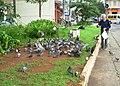 Pombas na praça à esquina da Avenida Jabaquara com a Rua Luís Góis - panoramio - Alexandre Possi (1).jpg
