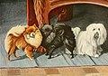 Pomeranians, maltese.jpg