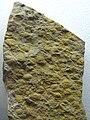 Pompeckium Palaeontological exhibition Prague 01.JPG