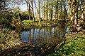 Pond in Great Canfield, Essex England 02.jpg