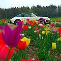 Porsche 911 Targa, Tulips, 2014 jpg.jpg