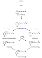 Postulated biosynthesis of trisporic acid B (van den Ende, 1976; Sutter et al., 1989; modified).png