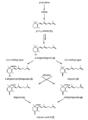 Postulated biosynthesis of trisporic acid B (van den Ende, 1976; Sutter et al., 1989; modified).png