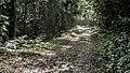 Praia da Fazenda, Unidade de Conservação Núcleo Picinguaba - Imagem 20.jpg