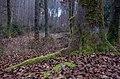 Prellerberg (46184557354).jpg