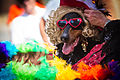 Pride Dog (7435014624).jpg
