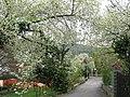 Primavera a Draga S.Elia - panoramio.jpg