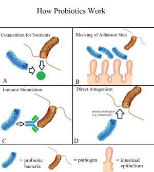 Probiotic - Image: Probiotic