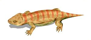 Procolophonidae - Life restoration of Procolophon pricei from the Early Triassic of South Africa