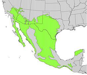 Prosopis glandulosa - Image: Prosopis juliflora range map